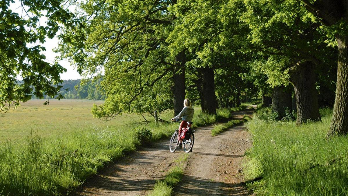 Naturerlebnis Müritz-Nationalpark