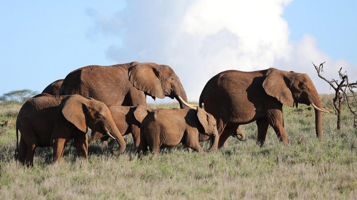 Kieling19_Elefanten_klein