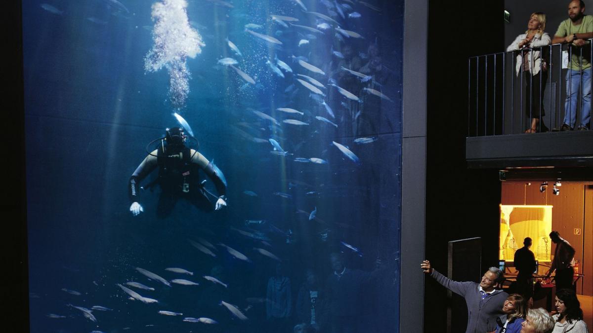 aquarium_1287408943_4