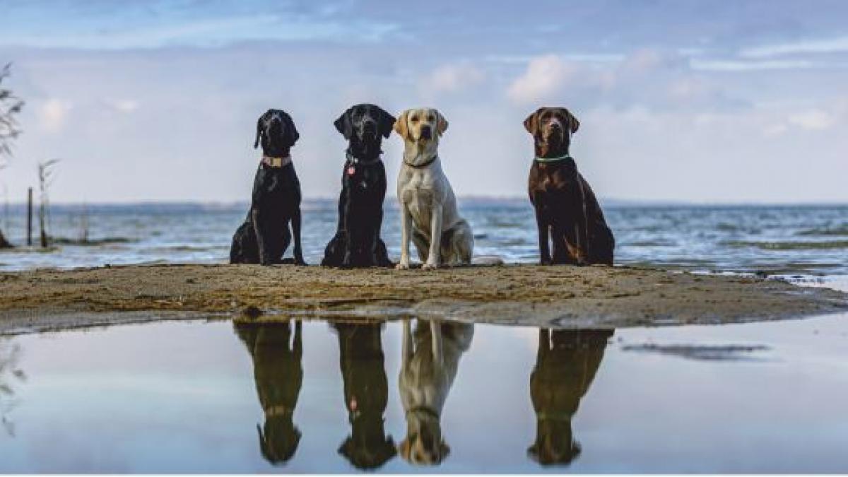 Hundecamp Bolter Ufer