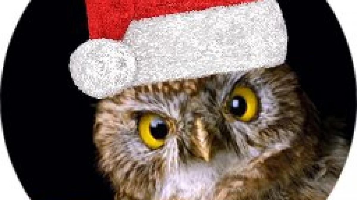kauz_mit-weihnachtsmuetze