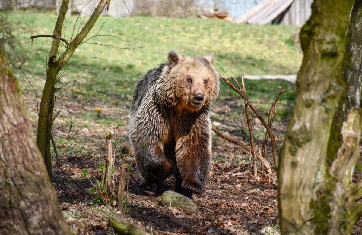 Spaziert durch den BÄRENWALD Müritz und entdeckt die Bären.