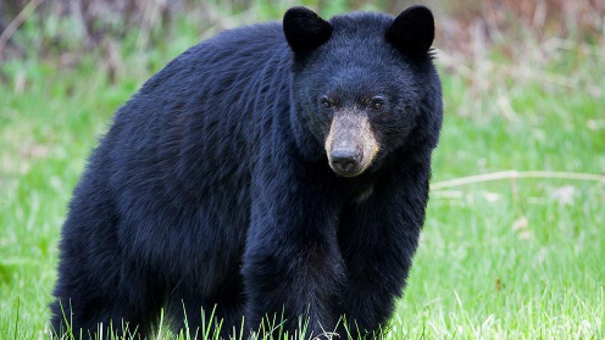 """""""Kanada und Alaska - 3000km Wildnis und Freiheit am Yukon"""""""