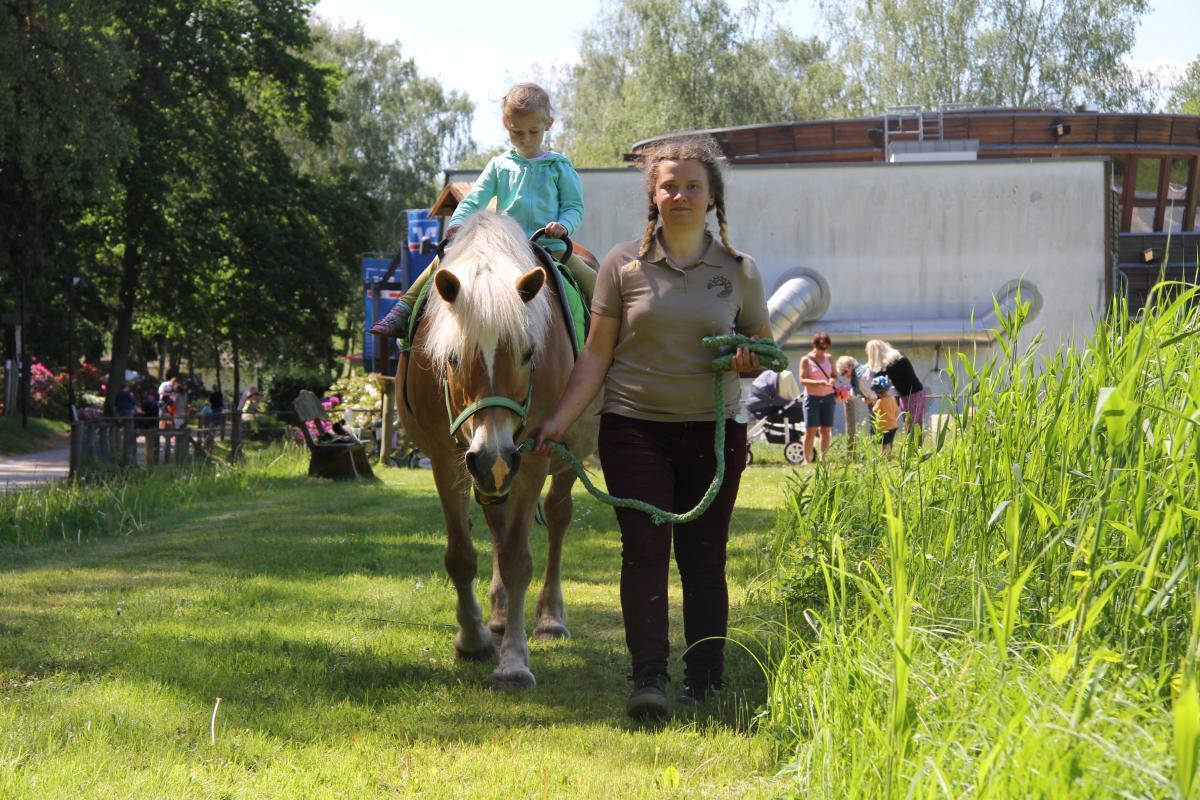 Ponyreiten beim VR-Kindertag im Wildpark-MV